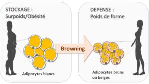 browning-shema